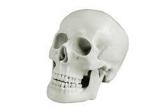 head skalle Fotografering för Bildbyråer