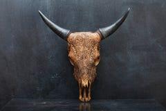 Head skalle av tjuren på den texturerade bakgrunden royaltyfri foto
