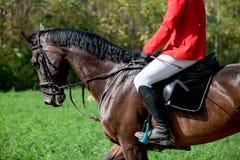 Head skottcloseupen av en dressyrhäst under konkurrenshändelse Färg ryttare royaltyfri foto