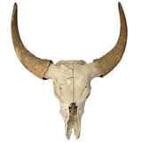 Head skull of bull Royalty Free Stock Image