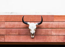 Head skull of bull on the wood  background Stock Image