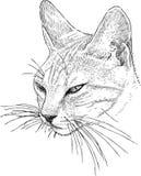 Head of a sleepy cat Stock Image