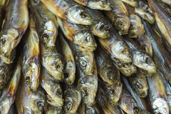 Head small dried fish. Stock Images