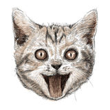Head of smiling cat Stock Photos