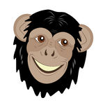 Head of a smiling monkey Royalty Free Stock Photos