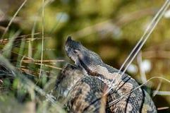 Head of snake viper in brushwood Stock Photos