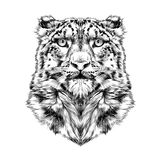 Head of the snow leopard Royalty Free Stock Image