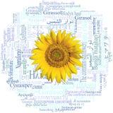 head solrostextur för bakgrund Solros som är skriftlig i femtionio olika språk Ord CLOUD Arkivfoton