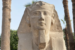 Head of sphinx Royalty Free Stock Photography