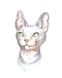 Head of the sphinx cat. Image of a thoroughbred sphinx cat. Watercolor painting Royalty Free Stock Photos