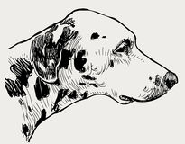 Head of a spotted dog Stock Photos