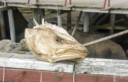 Head of stockfish Stock Images