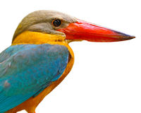 Head of Stork-billed Kingfisher Stock Photos