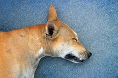 head of stray dog sleep on ground Royalty Free Stock Image
