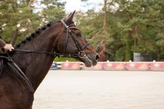 head tävlings- hästflyttning Royaltyfria Foton
