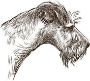 Head of terrier royalty free illustration