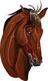 Head thoroughbred horse breed. Vector drawing of a horses head Stock Photography