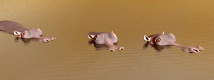 Three discret hippopotamus - 3D render Royalty Free Stock Photography