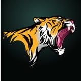 head tiger Arkivfoto
