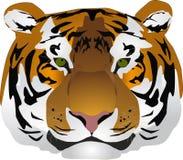 head tiger Royaltyfri Illustrationer