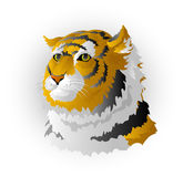 Head of a tiger Stock Photo