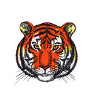 head tiger Royaltyfri Foto