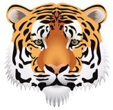 head tiger vektor illustrationer