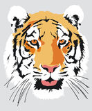 Head of a tiger royalty free illustration
