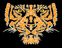 head tiger Arkivbild