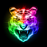 Head of tiger in colorful fire. Head of tiger blazing in spectrum fire on black background Stock Photography