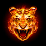Head of a tiger in flame Stock Photos