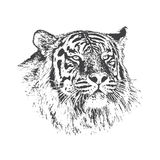 Head of tiger. Hand drawn vector illustration.Isolated on white background.Wild animals royalty free illustration