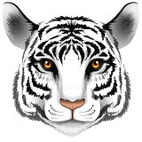 A head of a tiger Stock Photography
