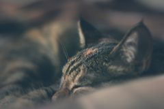 The head of a tortoiseshell cat. stock images