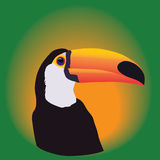 Head of a Toucan on a green background.  Royalty Free Stock Photography