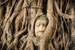 Head träd Wat Maha That Ayutthaya för Buddha den buddha statyn som fångas i det Bodhi trädet, rotar historisk park för ayutthaya Royaltyfri Bild