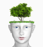 Head with tree. White human head with tree (3D concept Royalty Free Stock Photos