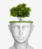 Head with tree. White human head with tree (3D concept Royalty Free Stock Photography
