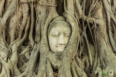 Head in the tree of Unseen Thailand Royalty Free Stock Photos
