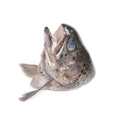 Head of trout fish Stock Photos