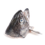 Head of trout fish Stock Photography