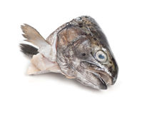 Head of trout fish Royalty Free Stock Images