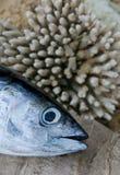 Head of tuna fish Stock Images