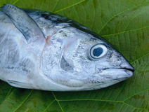 Head of tuna fish Stock Photo