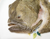 Head of turbot Stock Photos