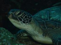 Head of turtle Stock Photos