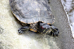 Head of turtle. Stock Images
