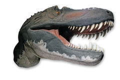 Head of a Tyrannosaur Stock Photos