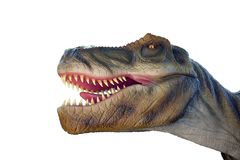 The head of a Tyrannosaurus Rex on white background. The head of a Tyrannosaurus Rex on white background with open mouth Royalty Free Stock Photography