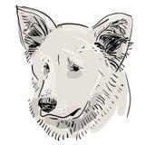 Head, tysta ned hunden herde Skissa teckningen Svart kontur på en vit bakgrund Royaltyfri Foto